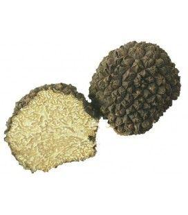 Fresh summer truffle Aestivum