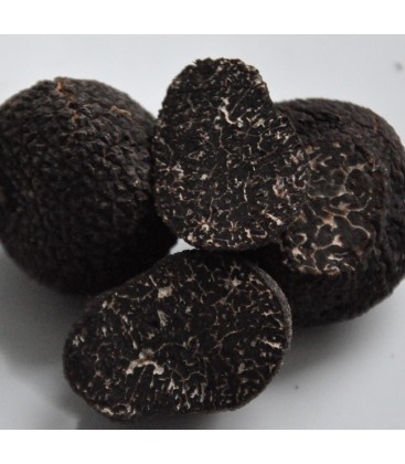 Fresh black truffle from Périgord Extra