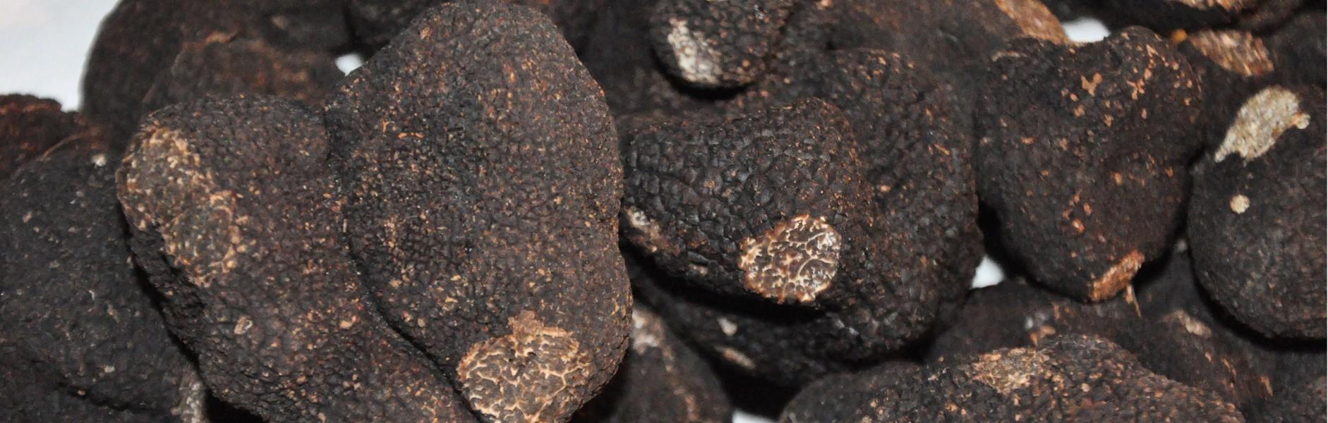 Truffles From Perigord